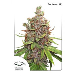 Auto Glueberry O.G. (Dutch Passion®)