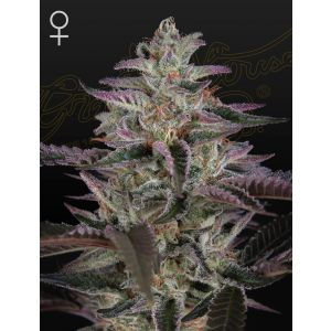 Banana Krumble (Green House Seeds®)