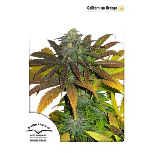 Californian Orange® (Dutch Passion®)