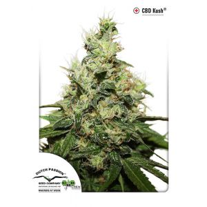 CBD Kush® (Dutch Passion®)