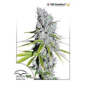 CBD Skunk Haze® (Dutch Passion®)