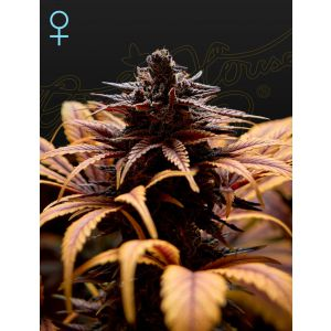 Deep Candy (Green House Seeds®)