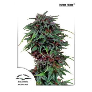 Durban Poison® (Dutch Passion®)