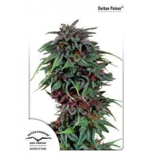 Non Feminized Durban Poison® (Dutch Passion®)-10 seeds