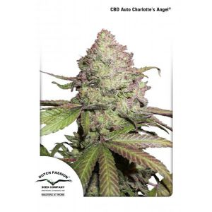 CBD Auto Charlotte's Angel® (Dutch Passion)