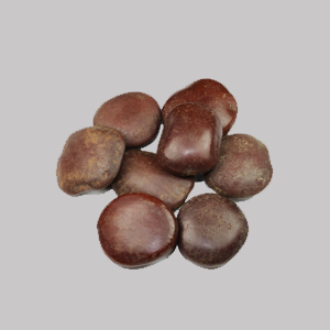 African Dream Bean (Entada rheedii)