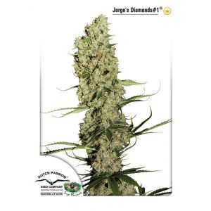 Jorge's Diamonds#1® (Dutch Passion®)