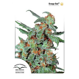 Orange Bud® (Dutch Passion®)