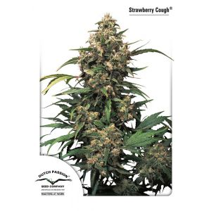 Strawberry Cough® (Dutch Passion®)