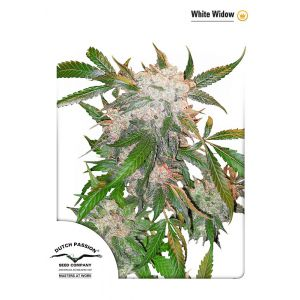 White Widow® (Dutch Passion®)