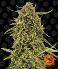 Non Feminized Widow Remedy™ (Barney's Farm) - 10 seeds