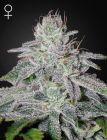 Franco's Lemon Cheese® (Green House Seeds®)