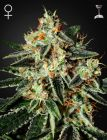 GH Cheese® (Green House Seeds®)