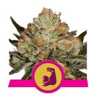 HulkBerry (Royal Queen Seeds)