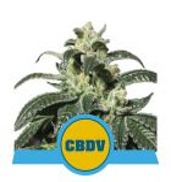 Royal CBDV Automatic (Royal Queen Seeds)