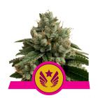 Legendary OG Punch (Royal Queen Seeds)