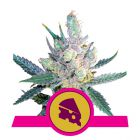 Royal Cheese - Fast Version (Royal Queen Seeds)