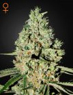 Super Critical® (Green House Seeds®)