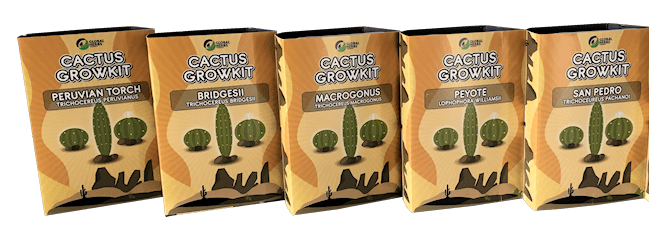 Cactus Grow Kits Kosmic Kitchen